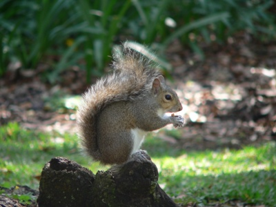 Bok Santuary Squirrel