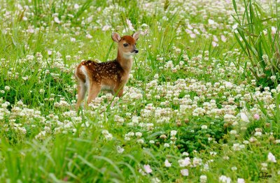 Bambi by Quy