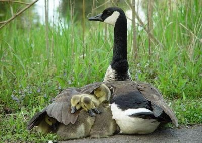 Mom's protection