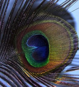 Feathers – From CreationMoments