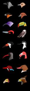 Bird Beaks from Wikipedia