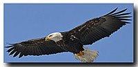EagleFlySM1
