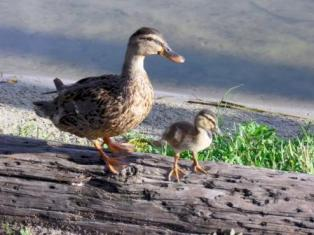 Mom and Baby at Lake Hollingsworth
