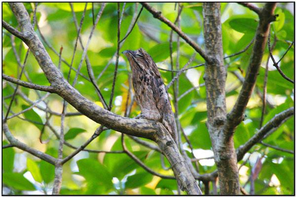 "Missing Bird Photos Desired – ""Birdographers"" Wanted (2/2)"