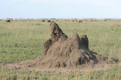 Termite Mound in Tanzania by Bob-Nan