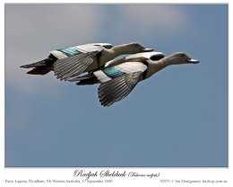 Birds of the Bible – Birds of theWhat??