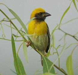 Bird-watching Devotional Activity