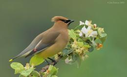 Sunday Inspiration – Passeriformes ReviewII
