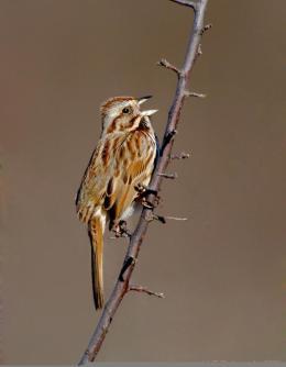 Sunday Inspiration – SparrowsII