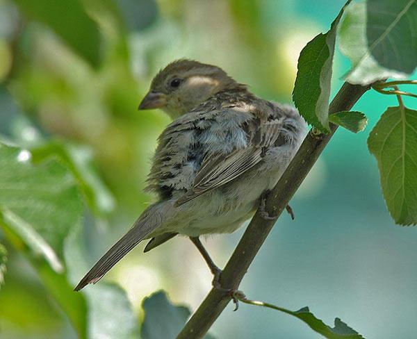 Bird of the Bible - Purifying Bird (2/3)