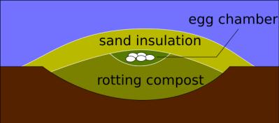 Malleefowl Mound ©Wikipedia