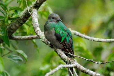 Quetzal by Reinier Munguia
