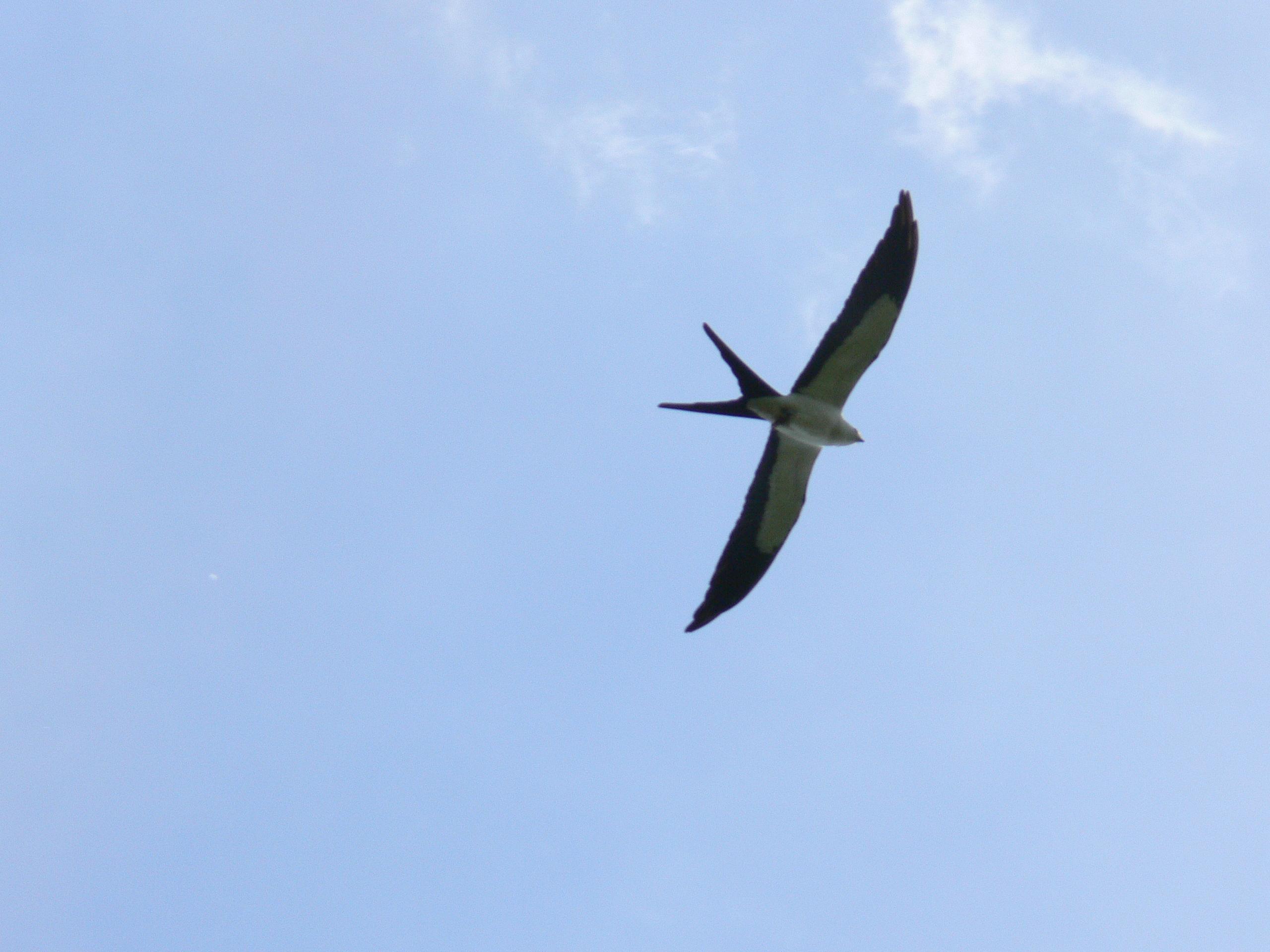 Birds Of The Bible Kite Lees Birdwatching Adventures Plus