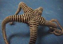 Brittlestar from Wikipedia