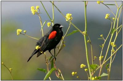 Birdwatching and Blessings – 6/7-10/21
