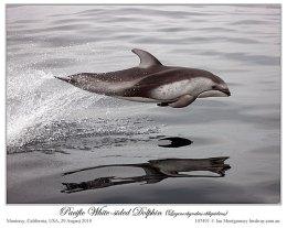 Plus – Amazing DolphinShow