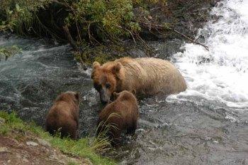 Bear Mom and two Cubs by Bob-Nan
