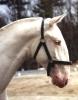 Horse -Zarcohm Roman nose