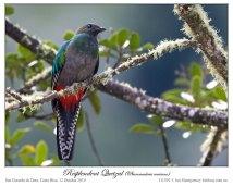 Resplendent Quetzal (Pharomachrus mocinno) by Ian Female