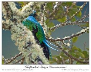 Resplendent Quetzal (Pharomachrus mocinno) by Ian5