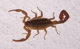 Scripture Alphabet of Animals: TheScorpion
