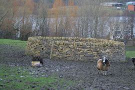 Sheep Fold©WikiC