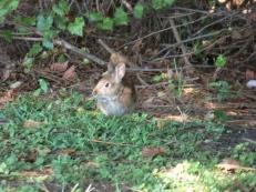 South Lake Howard - Bunny