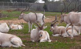 Scripture Alphabet of Animals: TheUnicorn
