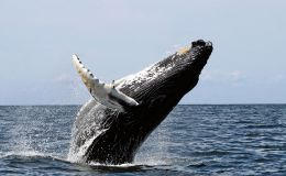 Scripture Alphabet of Animals: TheWhale