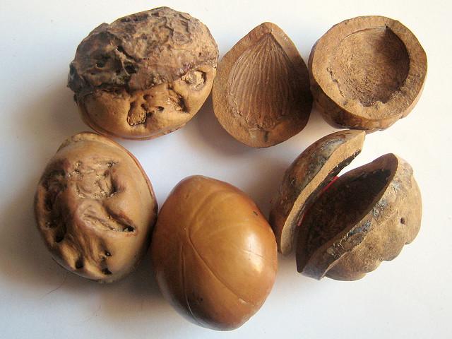 Tambalacoque (Calvaria Major) Seeds©©