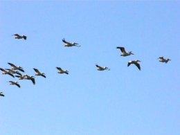 "Six Word Birds – The""V"""