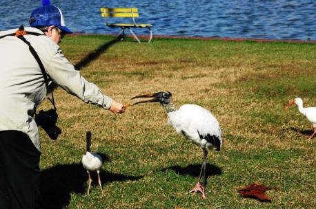 Lee feeding Wood Stork at Lake Morton by Dan