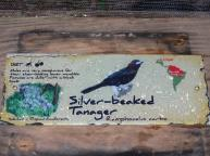 Silver-beaked Tanager (Ramphocelus carbo) sign by Lee