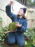 Kakapo (Strigops habroptila) ©Dept of Conservation-To See Relative Size