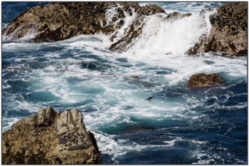 Waves on Rocks - Point Lobos State Reserve by Daves BP