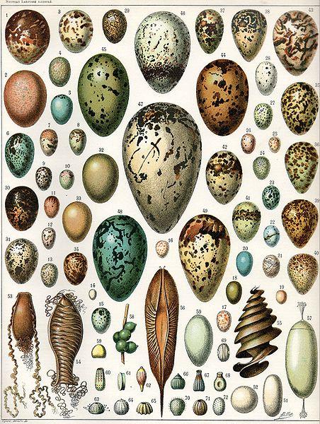 Bible Birds - Facts About Bird Eggs (6/6)