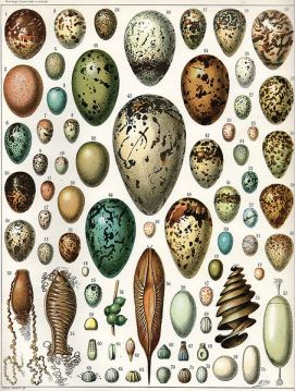 Different Eggs- Birds and Others - from Wikipedia