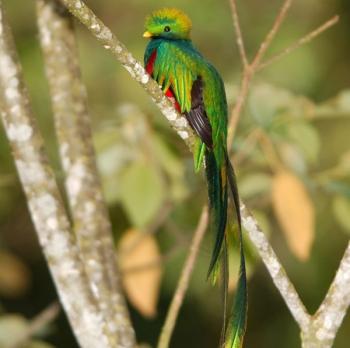 10. Quetzal