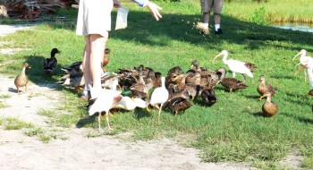 Ladies feed the birds at Lake Hollingsworth