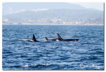 Humpback Whale ©©