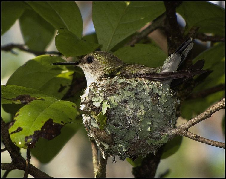 Bible Birds - Facts About Bird Eggs (5/6)