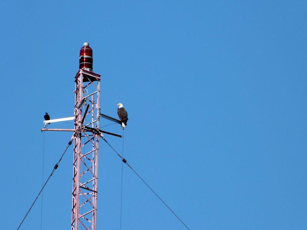 Bald Eagle on tower at S Lake Howard NPk 1 by Lee
