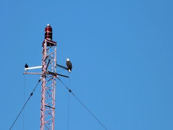 Bald Eagle on tower at S Lake Howard NPk 1 by Lee