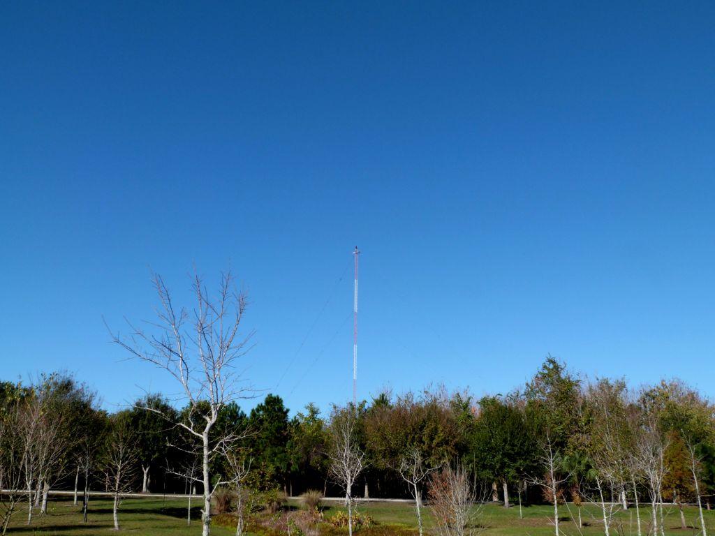 Bald Eagle on tower at S Lake Howard NPk 2 by Lee