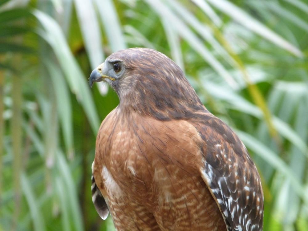 Bird of the Bible - Hawks (2/4)