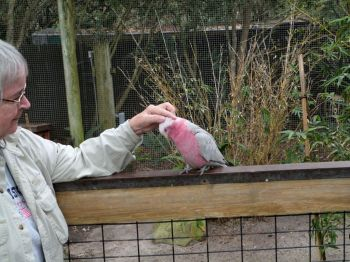 Galah and Lee - Brevard Zoo