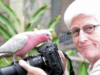 Galah (Eolophus roseicapilla) and Dan at Brevard Zoo