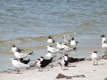 Some of the birds at the beach