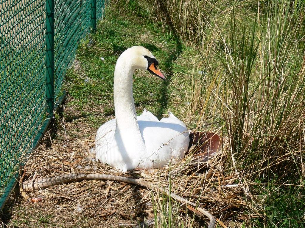 Pet Supplies Bird Supplies Nesting Time