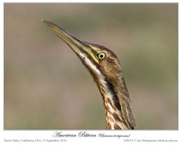 Avian And Attributes – Always There (Omnipresence)
